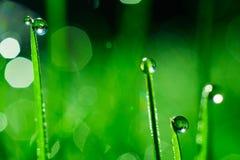 Het groene gras met dauw daalt dicht omhoog De abstracte Achtergrond van de Aard Stock Foto's