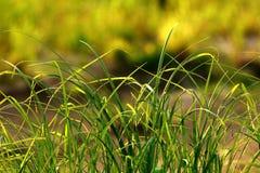 Het groene gras van de aardzuiverheid op de rivierbank Royalty-vrije Stock Afbeelding