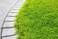 Het groene gras van de cementgang in het park Stock Foto