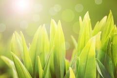 Het groene gras van de lente royalty-vrije stock afbeelding