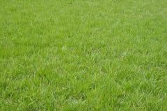 Het groene gras van de lente Stock Fotografie