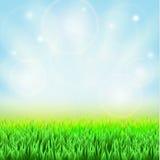 Het groene gras van de lente Stock Afbeeldingen