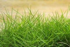 Het groene Gras van de Zomer Stock Foto's