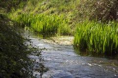 Het groene gras van het kreekwater Stock Fotografie