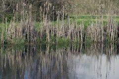 Het groene gras van het meerwater Stock Fotografie