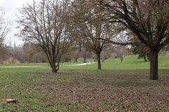 Het groene gras van parcbomen royalty-vrije stock afbeeldingen