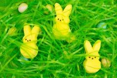 Het groene gras van Pasen met verborgen eieren en konijntjesachtergrond voor de vakantie royalty-vrije stock afbeeldingen