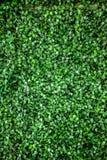 Het groene gras van plastiek verlaat muurtextuur voor achtergrond, Royalty-vrije Stock Foto's