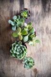 Het groene huis plant ingemaakt, succulents in een mand stock afbeelding