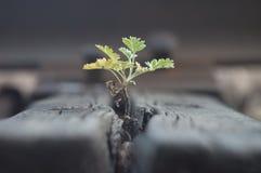 Het groene kleine spruit uitrekken zich naar de hemel Het aanpassingsvermogen van het wild aan technologische vooruitgang in de s stock afbeeldingen