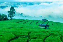 Het groene landbouwbedrijf van het rijstterras Stock Foto's