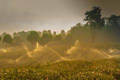 Het groene landschap van de theeaanplanting Stock Afbeeldingen