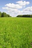 Het groene landschap van het grasgebied Stock Afbeelding