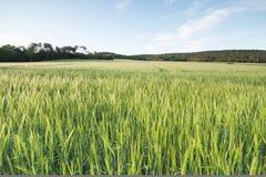 Winderig grasgebied Stock Fotografie
