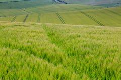 Het groene Landschap van Sussex Royalty-vrije Stock Afbeelding