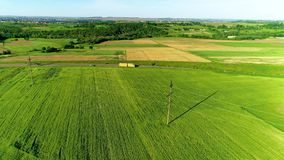 Het groene landschap van het tarwegebied Het luchtlandschap van het gerstgebied Het lucht groene gebied van de landbouwtarwe Het  stock footage