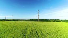 Het groene landschap van het tarwegebied Het luchtlandschap van het gerstgebied Het lucht groene gebied van de landbouwtarwe Het  stock video