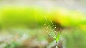 Het groene Leven Stock Foto