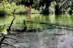 Het groene meer stock fotografie