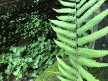 Het groene mos, aardbroek Stock Foto's