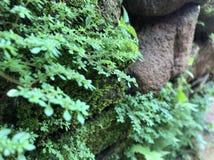 Het groene mos, aardbroek Royalty-vrije Stock Fotografie