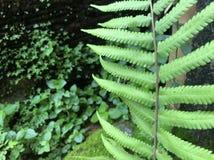 Het groene mos, aardbroek Royalty-vrije Stock Foto's