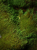 Het groene mos behandelde de stenen Royalty-vrije Stock Fotografie