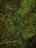 Het groene mos behandelde de stenen Stock Fotografie
