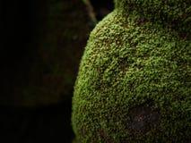 Het groene mos behandelde de stenen Royalty-vrije Stock Afbeeldingen