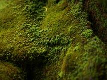 Het groene mos behandelde de stenen Royalty-vrije Stock Foto