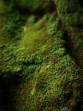 Het groene mos behandelde de stenen Stock Foto