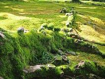 Het groene mos groeien op de boomwortel royalty-vrije stock foto