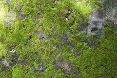 Het groene mos groeien op donkere steenvloer Stock Foto