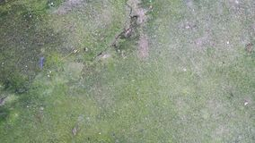 Het groene mos op de cementmuur royalty-vrije stock afbeeldingen