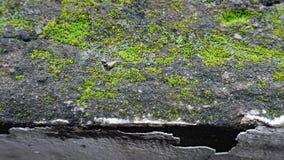 Het groene mos op de donkere muur stock afbeeldingen
