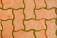 Het groene mos van de keibestrating binnen - tussen - Stock Afbeeldingen