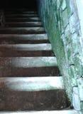 Het groene mos van kelderverdiepingstreden op de muur Stock Fotografie