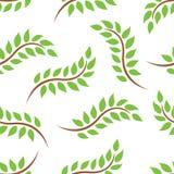 Het groene Naadloze Patroon van Bladeren Royalty-vrije Stock Fotografie