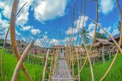 Het groene padieveld met aard en blauwe hemelbackgroundbamboo overbruggen op groen padieveld met aard en blauwe hemelachtergrond Stock Foto's