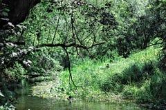 Het groene park, schoon meer voor het zwemmen, droge boom vertakt zich, zonnige dag Royalty-vrije Stock Fotografie