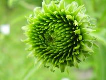 Het groene Patroon van de Knop Stock Foto