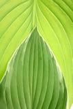 Het groene patroon van het Blad stock foto