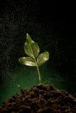 Het groene spruit groeien van grond Royalty-vrije Stock Afbeeldingen