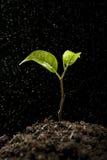 Het groene spruit groeien van grond Royalty-vrije Stock Afbeelding