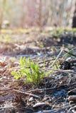 Het groene spruit voortkomen uit grond stock afbeelding