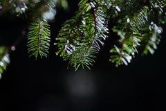 Het groene tak haning van hierboven Stock Foto
