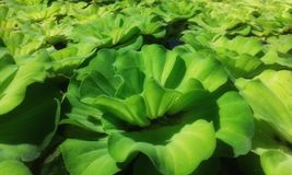 Het groene water greenGreen installatiebeeld royalty-vrije stock foto