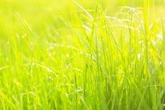 Het groene weelderige gras met dalingen Stock Afbeeldingen