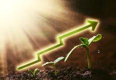 Het groene zaailing groeien ter plaatse in de regen Stock Afbeelding