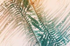 Het groene zonlicht van de de palmochtend van de bladkokosnoot royalty-vrije illustratie